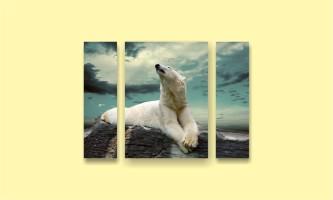 белый медведь север небо камни