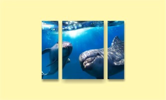 море дельфины
