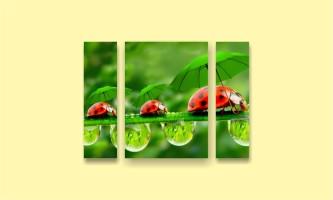 зелень божьи коровки роса зонт