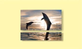 дельфины закат брызги