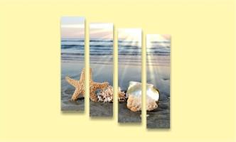 кораллы песок море ракушка закат