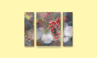 весна ветка цветок